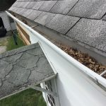 Maple Seeds Collecting in Gutters